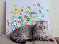 В Запорожье кот пишет картины гуашью