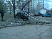 В Запорожской области ветер срывает крыши и валит деревья на машины