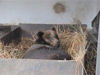В запорожском зоопарке родился медвежонок