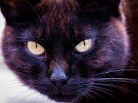 Запорожский студент заплатит за спасение кошки 80000 гривен