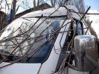 В Запорожье деревья попадали на маршрутку и машину «скорой»
