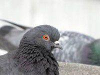 В центре Запорожья отряд спецназначения спасал голубя