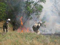 В заповеднике вспыхнул масштабный пожар (ФОТО)