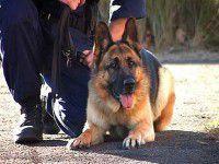 Служебная собака помогла найти контрабандные патроны