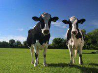 В Запорожской области две коровы погибли от удара молнией