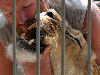 В зоопарке под Запорожьем можно будет переночевать с тиграми и львами