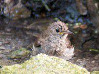 На Хортице птицы спасаются от жары в роднике (ФОТО)