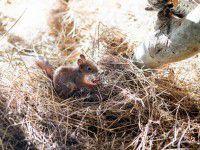 Центральный парк Запорожья заселили грызунами