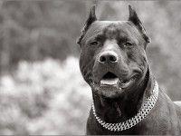 В Энергодаре грабитель оказался в тюрьме из-за собаки