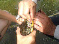 В Запорожье за пару минут спасли животное от страшной смерти (ФОТО)