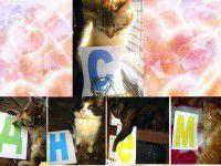 Волонтеры оригинально поздравили кошку с Днем рождения (ФОТО)