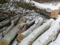 На Хортице нарубили деревьев на полмиллиона – виновных не ищут третий год
