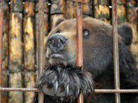 Зоопарк под Запорожьем хочет заполучить медведя, который откусил руку девочке