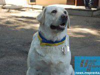 В одном из военкоматов собаку назначили командиром