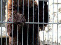 В Васильевском зоопарке поселился медведь, который откусил девочке руку