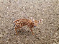 Питомцы бердянского зоопарка поучаствовали в летней фотосессии