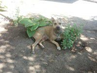 Утреннее фото: Запорожец привязал собаку к дереву и сбежал