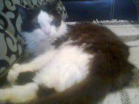 Утреннее фото: Запорожская кошка-дворняжка через Интернет «нашла» хозяев за границей
