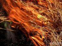 В Запорожье двое заводчан получили ожоги, пытаясь потушить траву