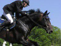 На Фестивальной мужчина на лошади сбил пешехода