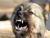 Под Запорожьем бездомный пес покусал пятерых человек