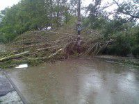 Директор «Основания»: На 12 часов дня упало почти 2000 деревьев