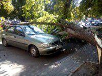 В центре Запорожья дерево рухнуло на легковушки (Фото)