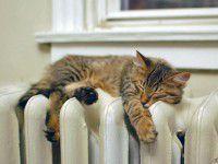 Запорожцы пока сидят без отопления