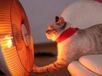 Запорожцы будут платить за отопление на треть больше