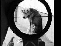 Мужчина несколько часов расстреливал собаку