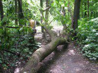 С Хортицы вывозят поваленные деревья для военной части — нужны руки