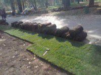В центральном парке Запорожья сакуры утепляют к зиме (Фото)