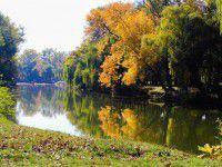 Утреннее фото: Бабье лето «гуляет» по Дубовой роще