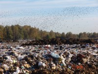 В Запорожской области ликвидировали крупную свалку