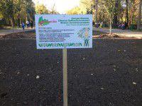 Фотофакт: В парке возле озера появилась аллея сакур