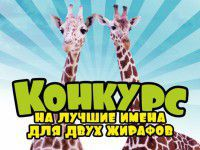 Запорожцев просят придумать имена двум жирафам из Чехии