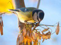 Кадр за кадром: Как проходит утро маленькой птички на Хортице