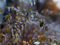 Утреннее фото: Запорожье во власти льда