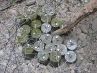 В Запорожской области нашли почти три десятка мин