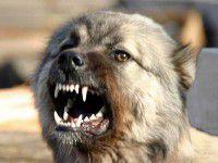 В Запорожской области бродячая собака едва не загрызла женщину