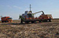 Фирма бердянского депутата собирала урожай с чужого поля