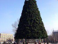 В Запорожье устанавливают главную елку (Фото)