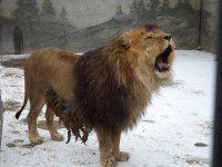 В зоопарке под Запорожьем звери снялись в первой зимней фотосессии