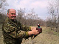 Запорожские охотники выпустили фазанов
