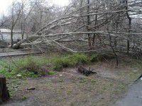 В Запорожье ураган валил деревья прямо на автомобили