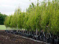 5 причин купить саженцы плодовых деревьев в интернет-магазине Greensad