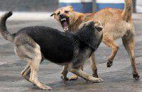 В запорожском селе велосипедистку разорвала стая собак