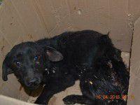Волонтеры ищут хозяина для собаки, серьезно пострадавшей в результате взрыва дома