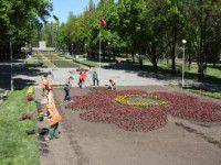 В центре Запорожья высадили большой красный мак