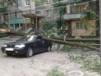 Фотофакт: В центре Запорожья упавшее дерево смяло легковушку